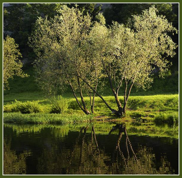 """фото """"Светлая лужайка, темная вода..."""" метки: пейзаж, вода, лето"""