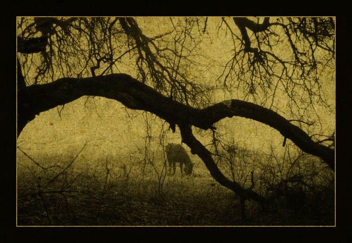"""фото """"The hors story # 2"""" метки: разное,"""