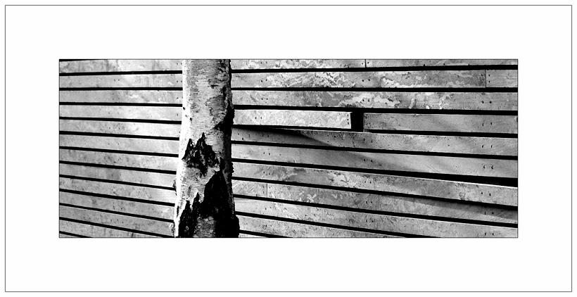 "photo ""bark"" tags: architecture, black&white, landscape,"