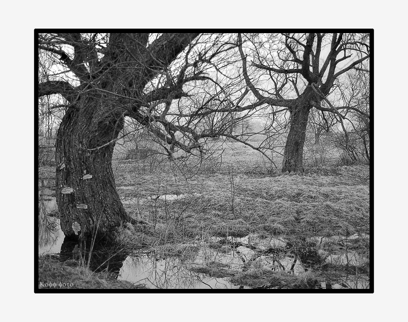 "photo ""***"" tags: black&white, landscape, spring"