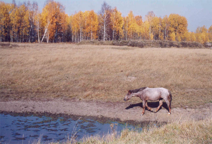"photo ""On a watering place"" tags: nature, landscape, autumn, wild animals"