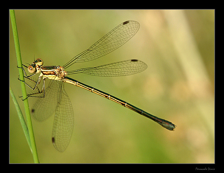 "photo ""Delicacy"" tags: nature, insect"
