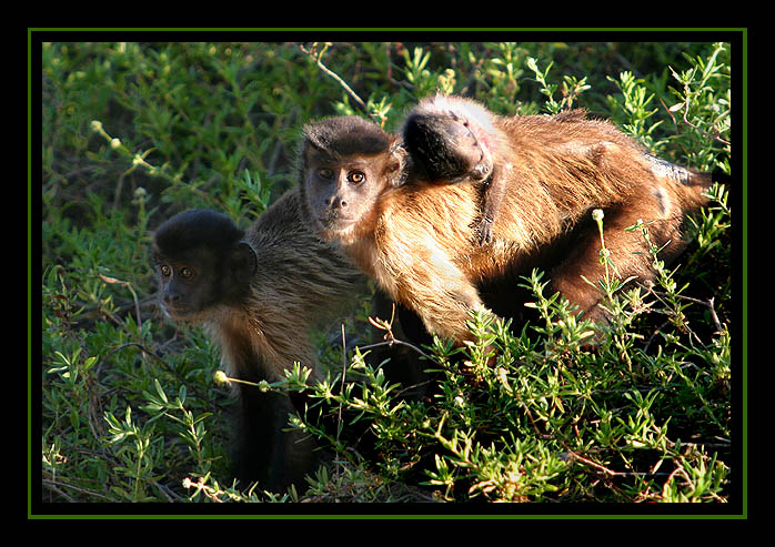"photo ""Family"" tags: nature, travel, South America, wild animals"