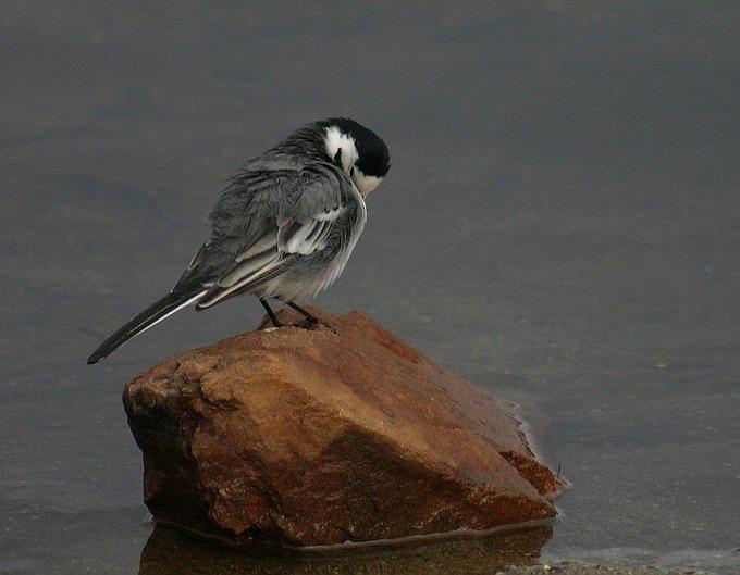 """photo """"Little bird"""" tags: nature, wild animals"""