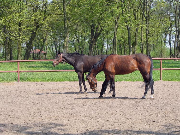 "photo ""horses"" tags: nature, pets/farm animals"