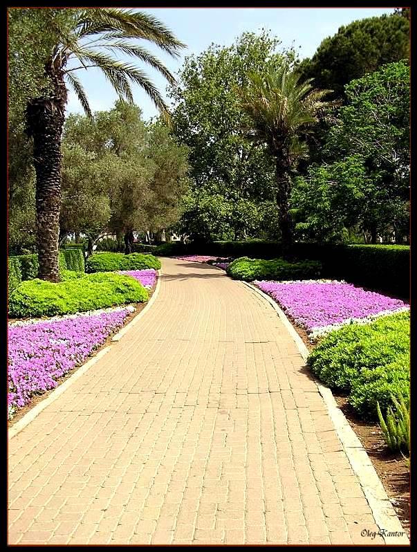 """photo """"Avenue of park"""" tags: nature, genre,"""