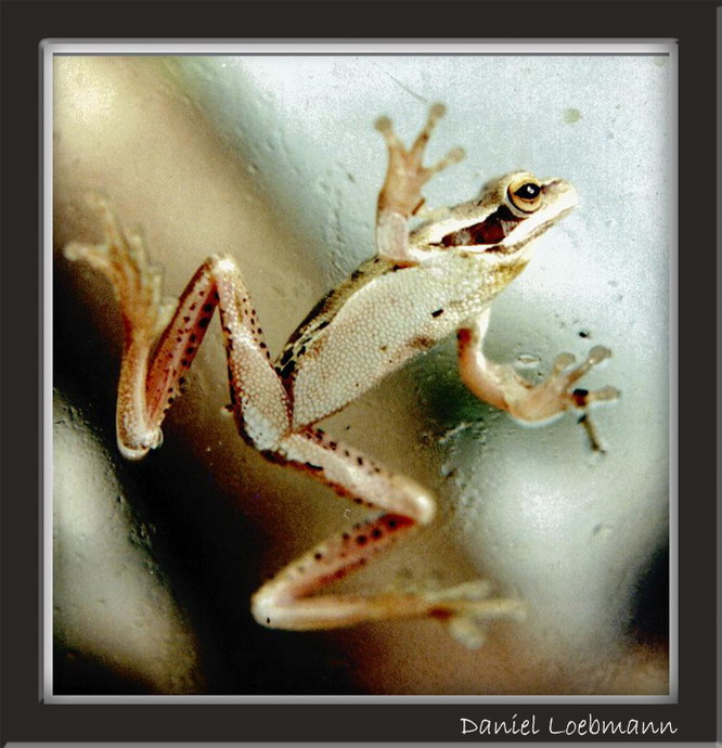 "photo ""Tree Frog"" tags: nature, macro and close-up, wild animals"