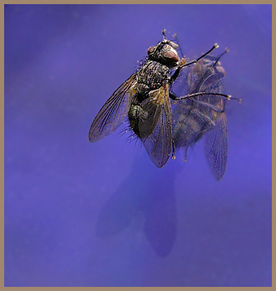 "photo ""dream about the sky"" tags: nature, macro and close-up, insect"