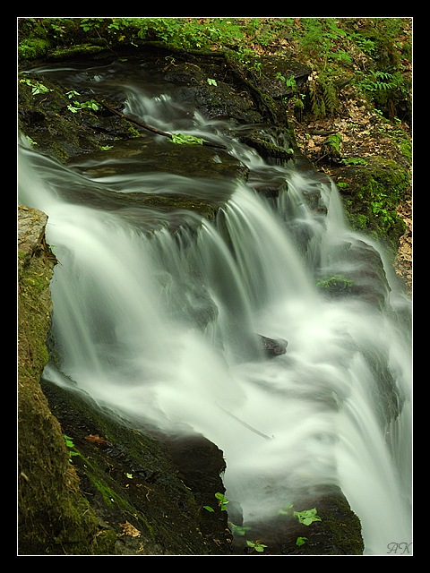 "photo ""Gunn Brook 3"" tags: landscape, nature, forest"
