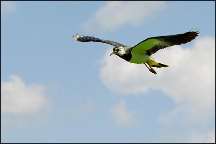 "photo ""Flight"" tags: nature, wild animals"