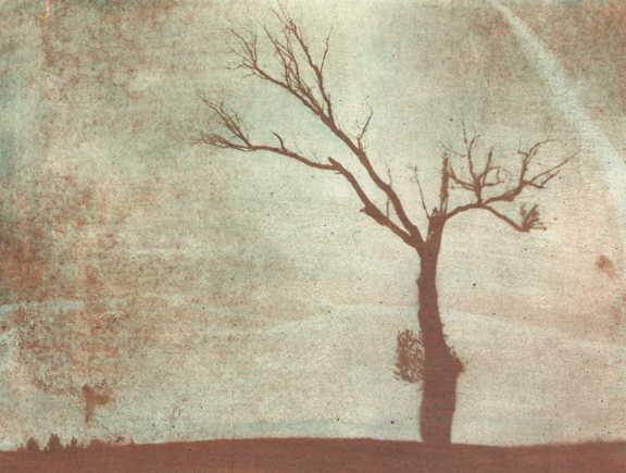"""фото """"Moribund tree"""" метки: ретро, пейзаж, лес"""