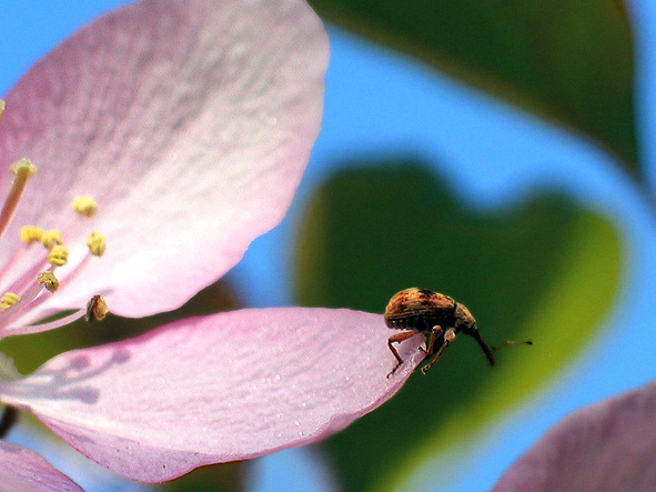 "photo ""bug"" tags: nature, macro and close-up, insect"