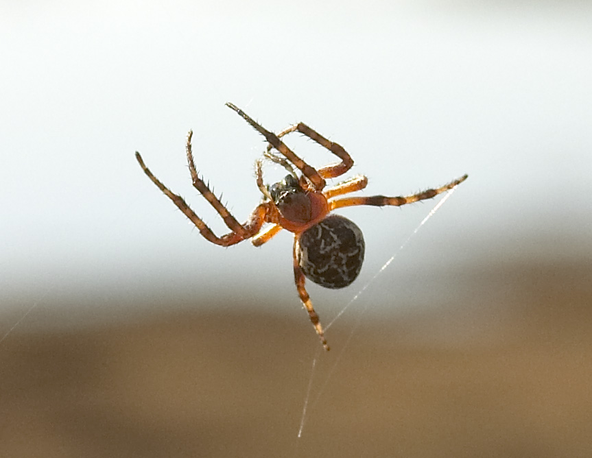 "photo ""The rope-walker"" tags: macro and close-up,"