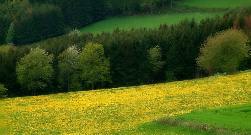"photo ""Frühlingsfarben"" tags: landscape, forest, spring"