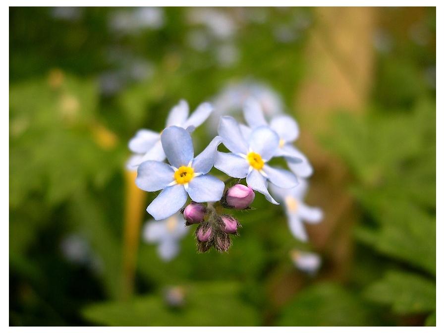 """фото """"Без названия"""" метки: природа, цветы"""