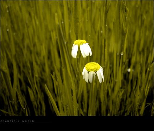 """photo """"beautiful world"""" tags: still life, nature, flowers"""