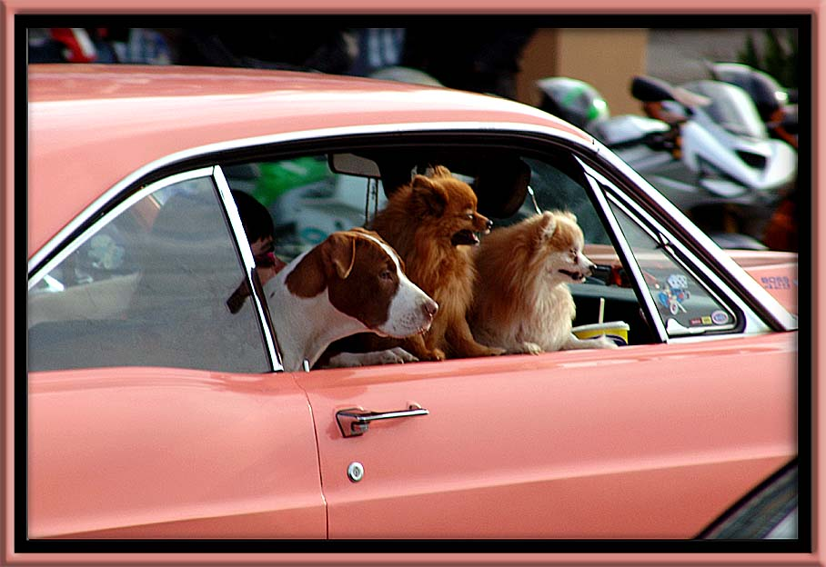 "photo ""dogday afternoon"" tags: reporting, misc.,"