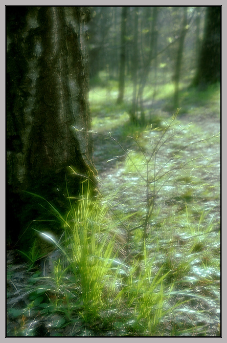 "photo ""Etude *"" tags: landscape, forest, spring"