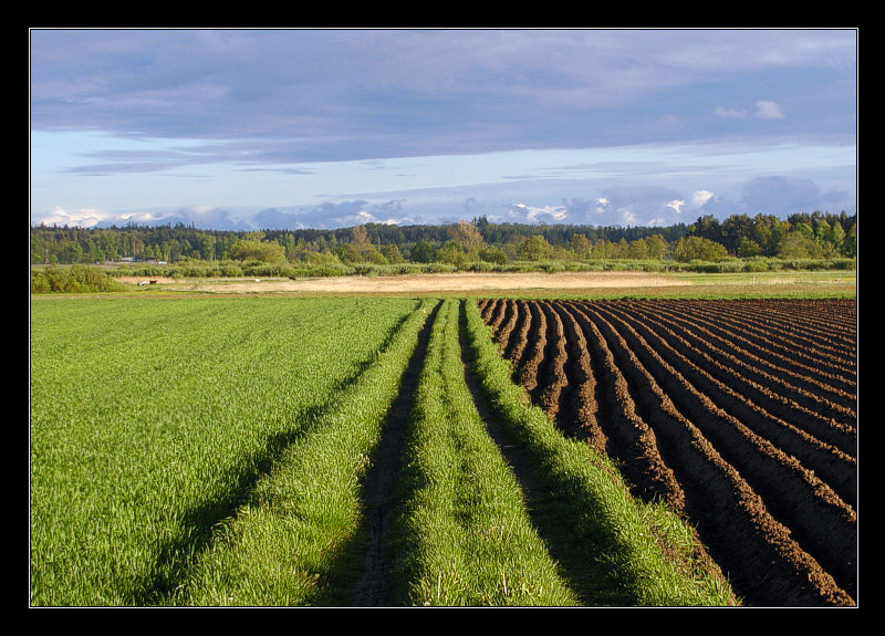 "photo ""borderlines ..."" tags: landscape, spring"