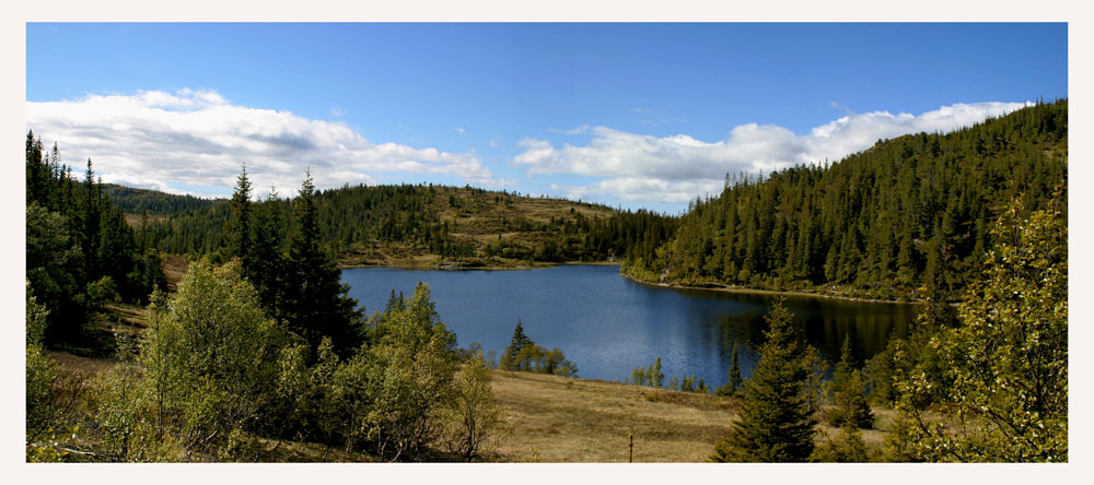 "photo ""Forest lake"" tags: landscape, summer"