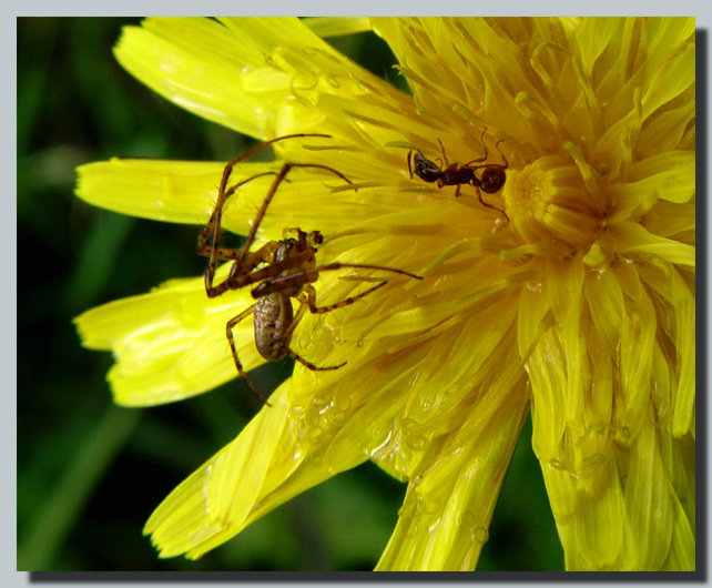 "photo ""Hunting after a rain..."" tags: nature, macro and close-up, insect"