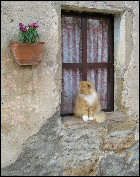 "photo ""The cat on window sits:)))"" tags: travel, nature, Europe, pets/farm animals"