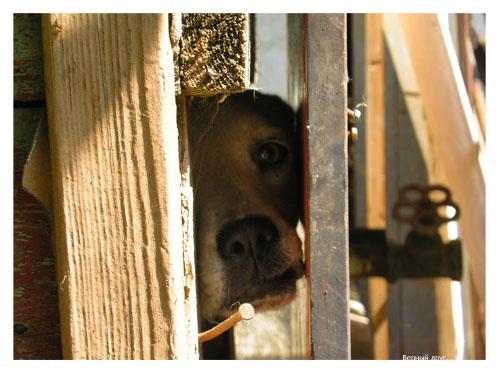 "photo ""Faithfull friend"" tags: nature, genre, pets/farm animals"