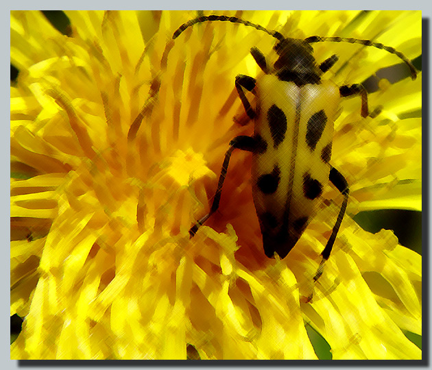 """photo """"Zzzz..."""" tags: nature, macro and close-up, insect"""