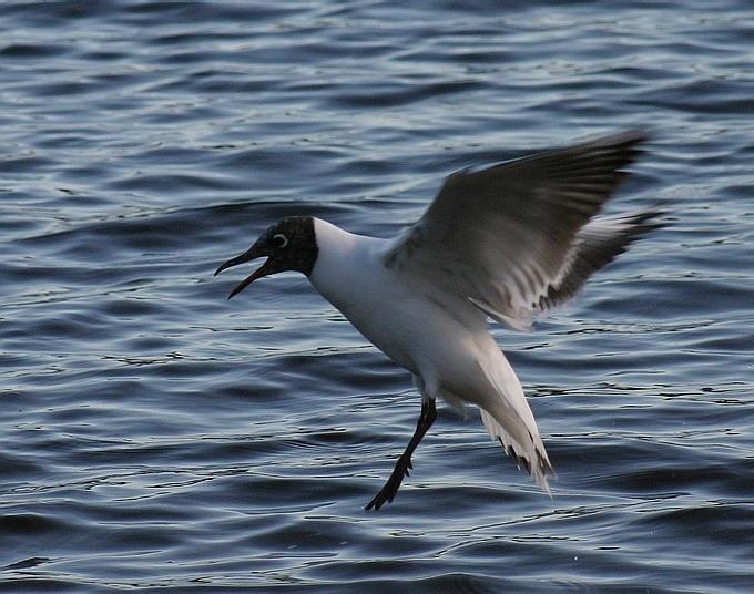 """фото """"Bird"""" метки: природа, дикие животные"""