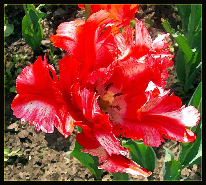 "фото ""С Днём Рождения, Лариса! (LASEMN)"" метки: природа, цветы"