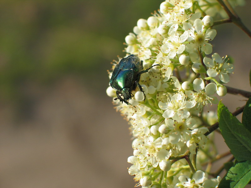 "photo ""the bug"" tags: nature, flowers, insect"