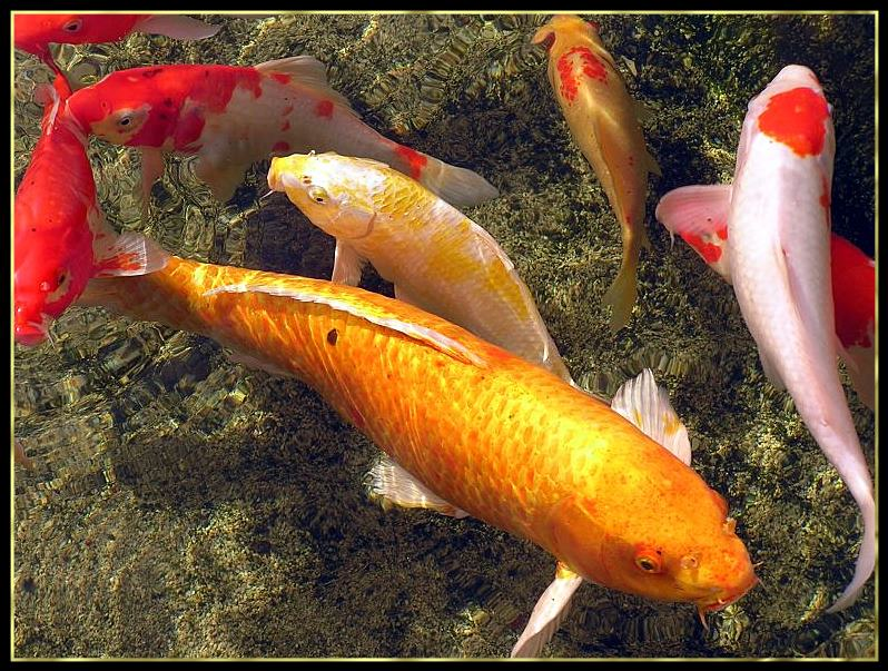 """photo """"""""Sea"""" of a fish"""" tags: nature, landscape, water, wild animals"""