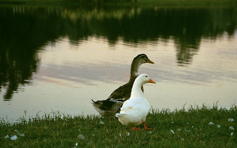 "photo ""Together"" tags: nature, pets/farm animals"