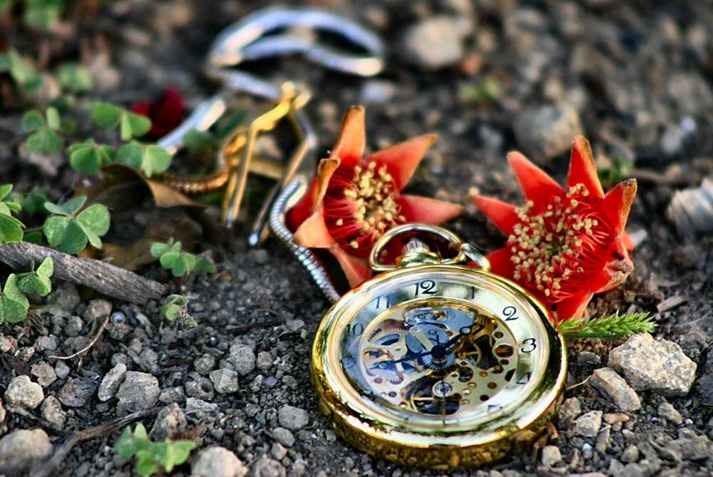 "photo ""the abandoned old clock"" tags: still life,"