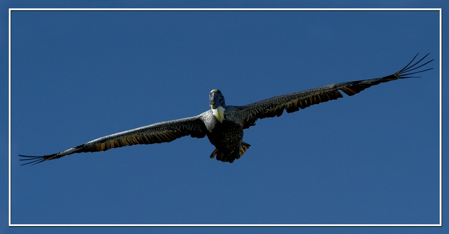 "photo ""wings-level flight"" tags: nature, wild animals"