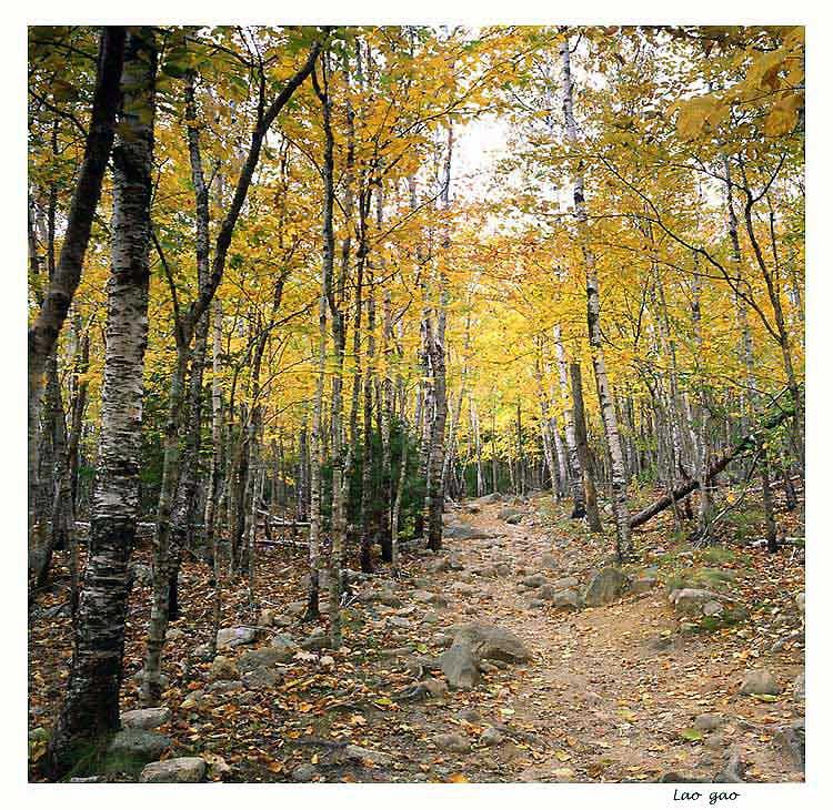 "photo ""woods"" tags: landscape, autumn, forest"