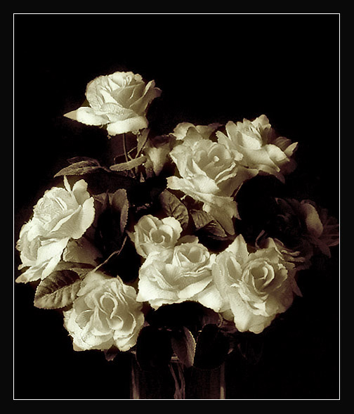 "photo ""Old roses"" tags: still life, black&white,"