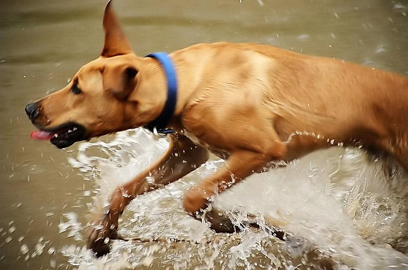 """photo """"Splash"""" tags: portrait, nature, pets/farm animals"""