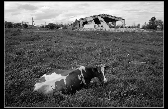 "photo ""Photo about milk"" tags: genre, black&white,"