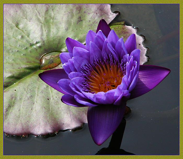 "photo ""Blue Beauty"" tags: nature, flowers"