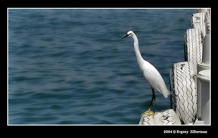 """фото """"The bird"""" метки: пейзаж, природа, вода, дикие животные"""