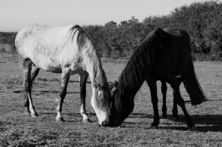 "photo ""Old Lovers in Black and White"" tags: nature, black&white, pets/farm animals"