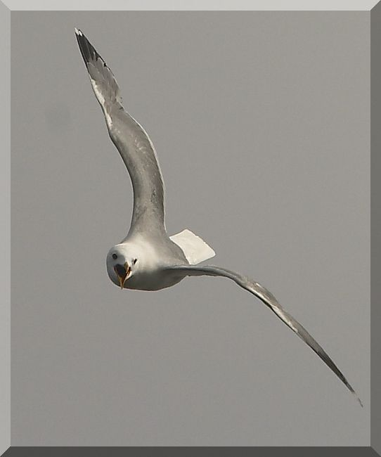 """photo """"seagul"""" tags: nature,"""