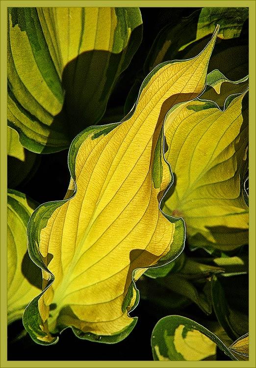 "фото ""Желтый лист"" метки: природа, цветы"