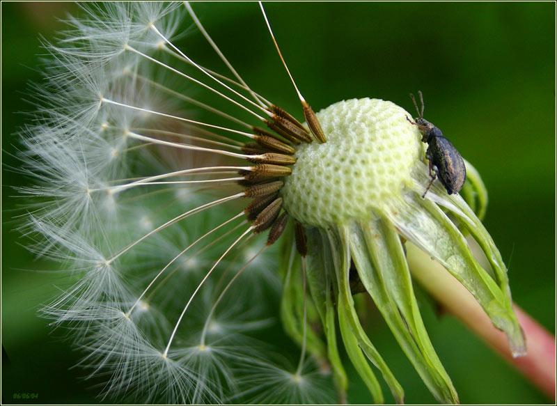 """фото """"На полянке"""" метки: макро и крупный план, природа, цветы"""