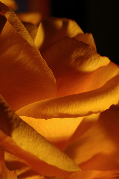 """photo """"#147"""" tags: macro and close-up, nature, flowers"""