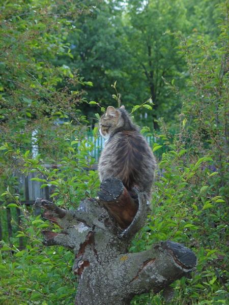 """фото """"мыслитель"""" метки: природа, домашние животные"""