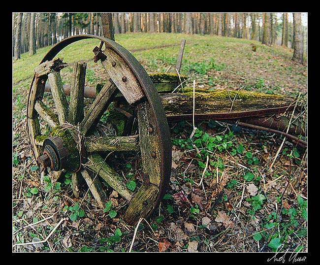 """photo """"Old cart"""" tags: landscape, forest"""