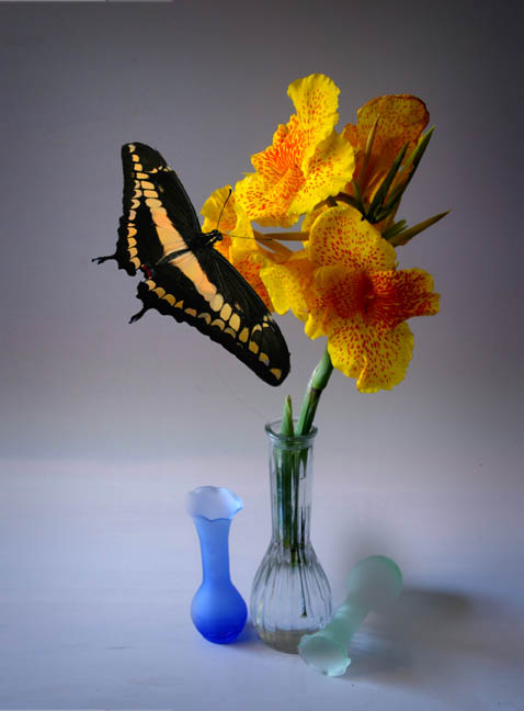 "photo ""Still Life with Butterfly"" tags: still life, montage,"