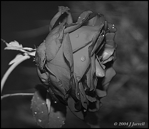 "photo ""Sad"" tags: nature, flowers"